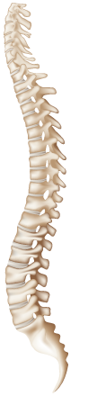 chiropractic spine